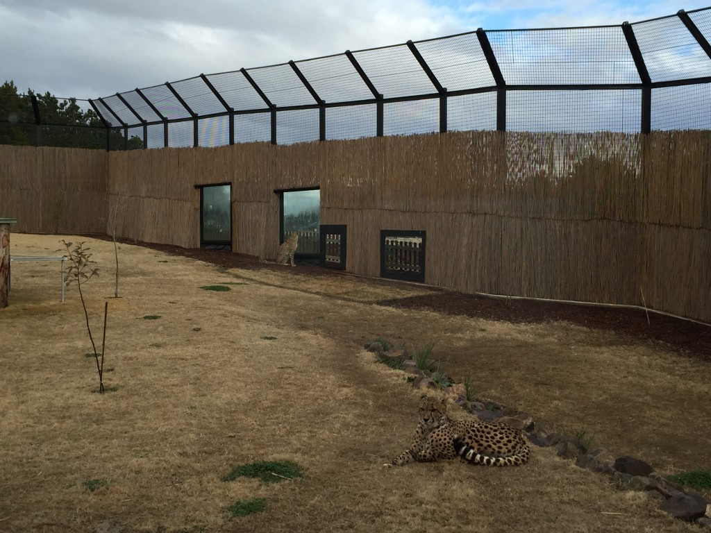 cheetah enclosure Jamala wildlife lodge