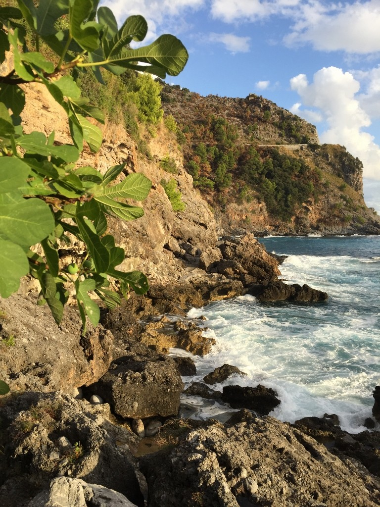 Finding free figs along the path to Path to U'Nastru beach, Cersuta , Maratea