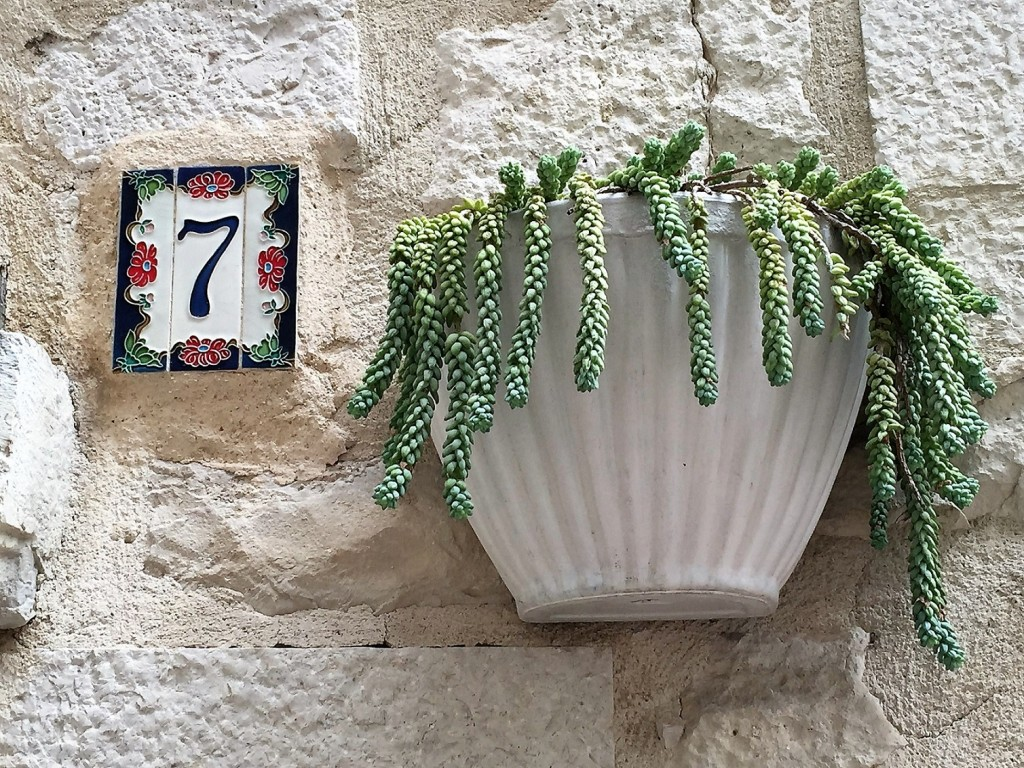street number and succulent plant in Trani
