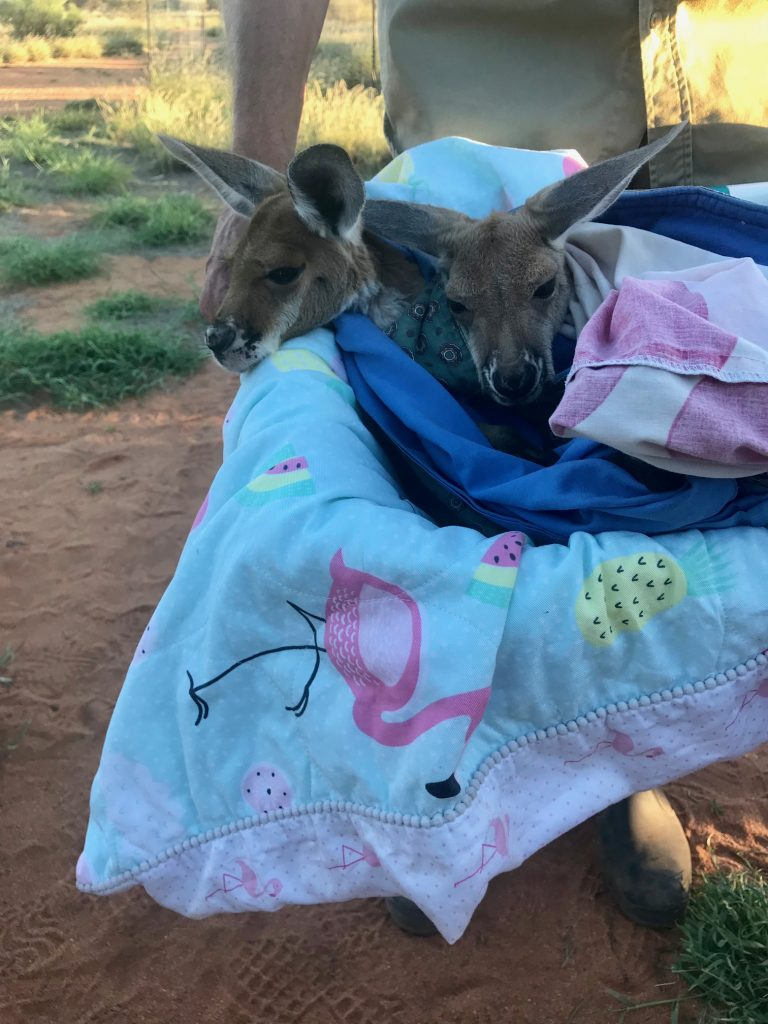 A laundry basket of Joeys