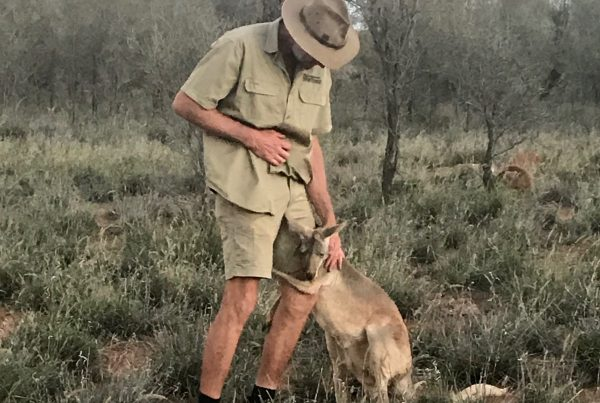 Kangaroo Sanctuary Alice Springs, Brolga and Queen Abi